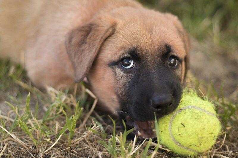 Wat je wel en niet moet doen bij het opvoeden van een puppy
