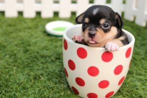 Dit Zijn De Beste Hondenmanden Voor Jouw Hond: De Toppers!