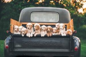 Dit zijn de beste hondenmanden voor in de auto