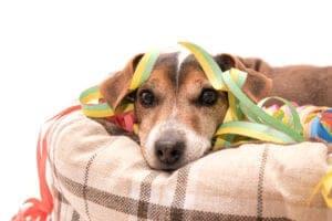 De beste orthopedische hondenmanden, minder pijn voor je hond!