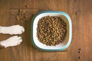 Lees meer over het artikel Welke hondenbrokken zijn de beste voor Jack Russells?