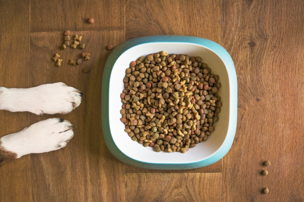 Welke hondenbrokken zijn de beste voor Jack Russells?