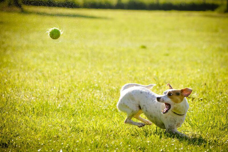 Dit is de beste ballenschieter voor jouw hond!