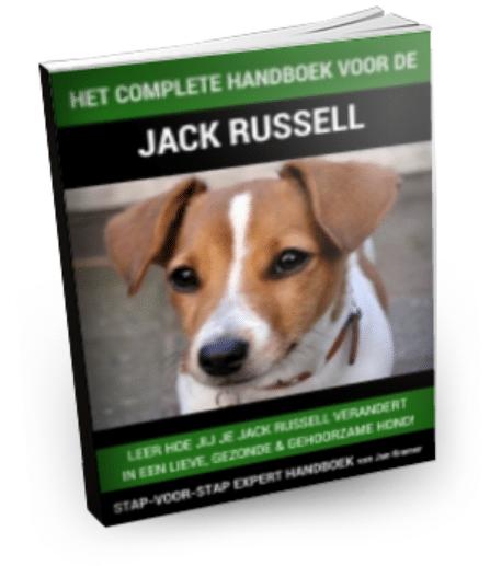 Hoe een Jack Russel opvoeden?