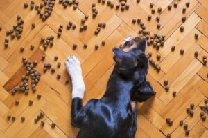 Lees meer over het artikel Het beste hondenvoer – Lees hier de top 5