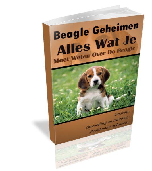 Welk tuigje voor Beagle? – Onze top 3!