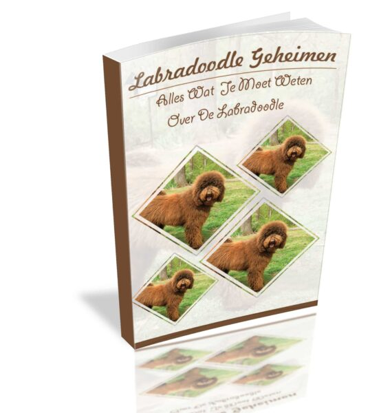 Labradoodle Geheimen Review