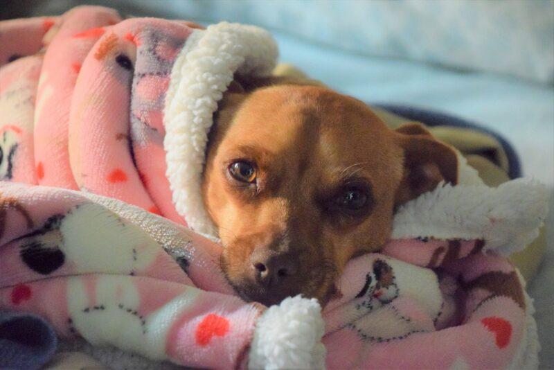 Ontwormen bij honden – Dit moet je doen!