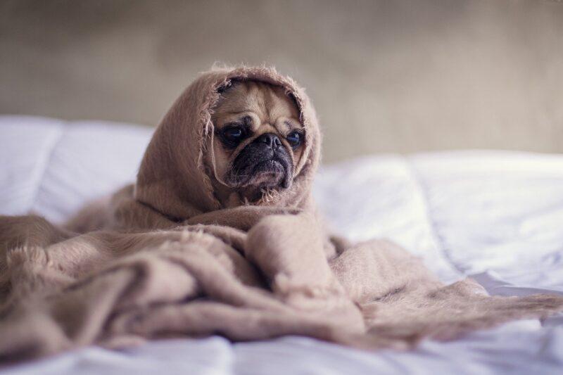 Artrose bij honden