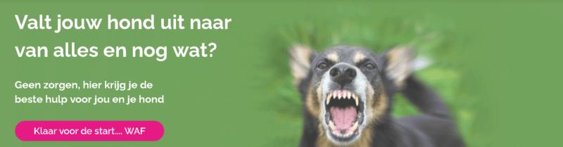 Puppypower cursus van Loca - is het de moeite waard?